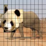 PandaPhant-1