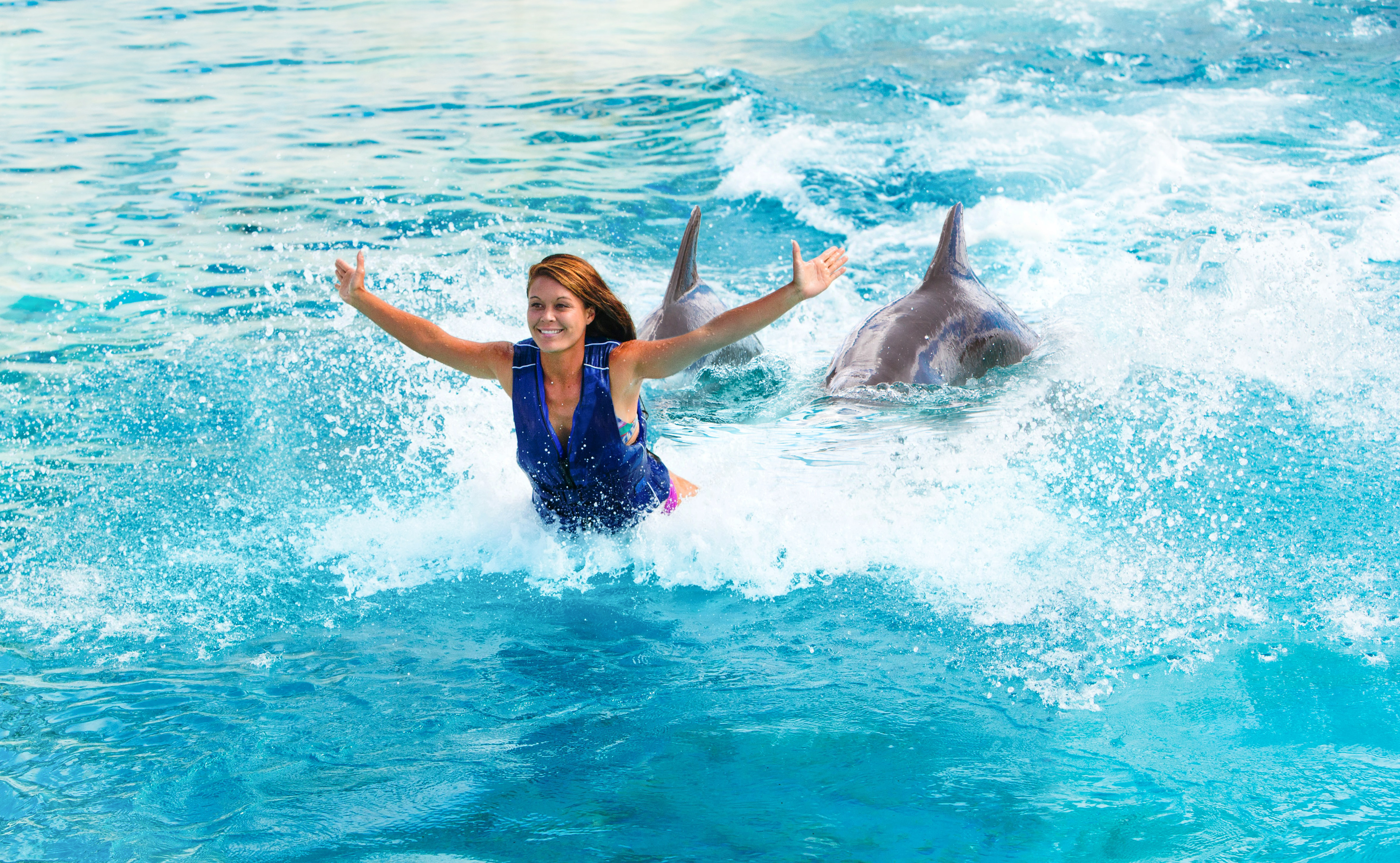 Product Royal Dolphin Encounter - Age 8 and Older