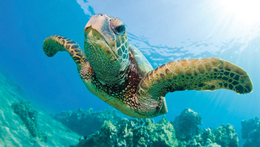 Product Morning Turtle Snorkel With Lunch (May - November Only)