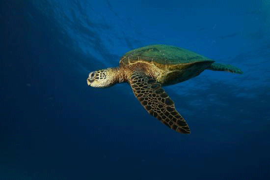 Product Afternoon Turtle Snorkel With Lunch