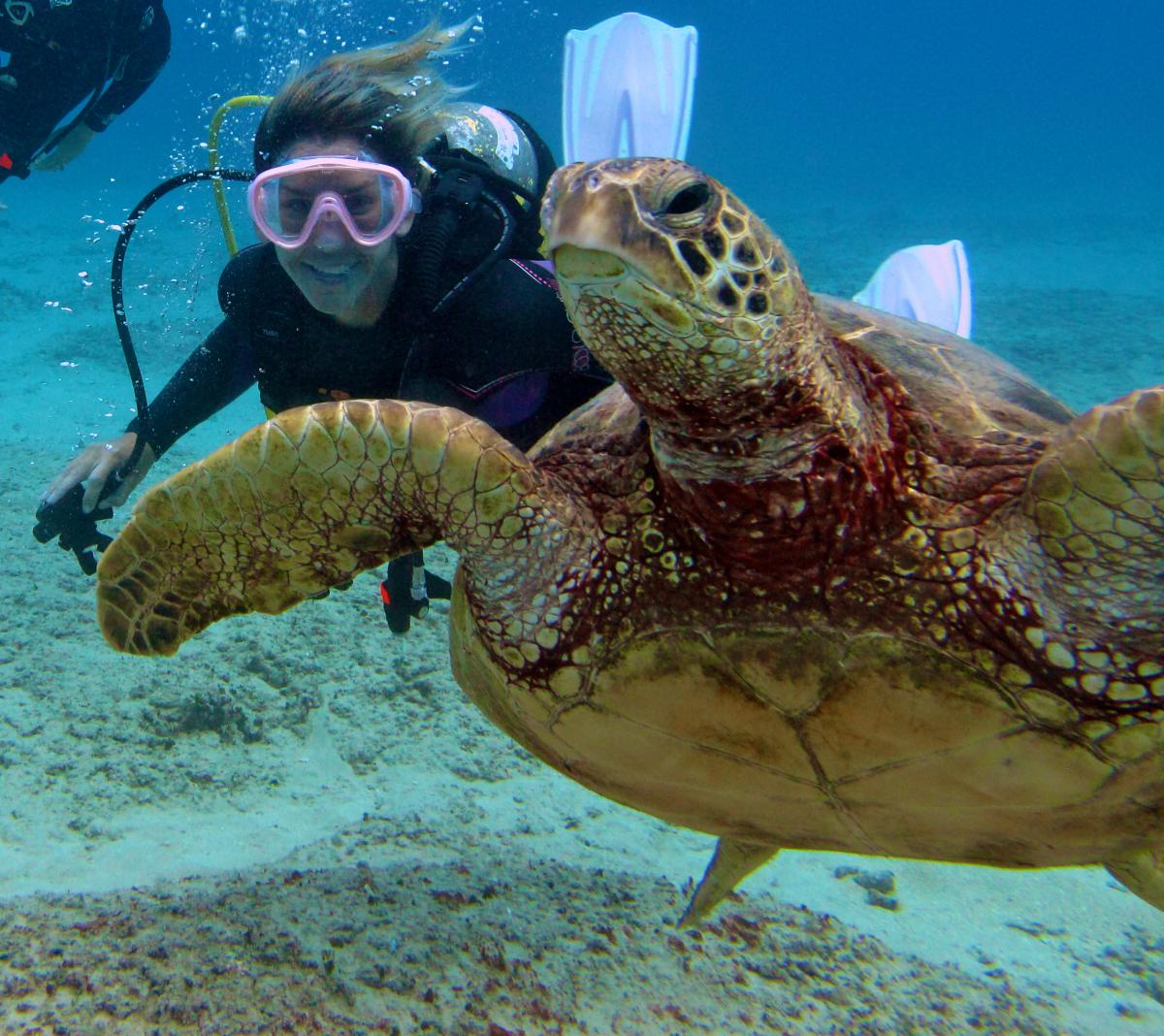 Product Two Tank Turtle/Reef Boat Dive
