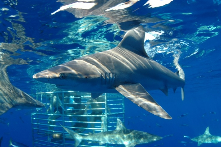 Product Shark Encounter