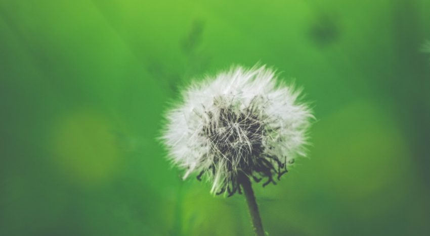 6 Things To Know About Complementary Health Approaches for Seasonal Allergy Relief