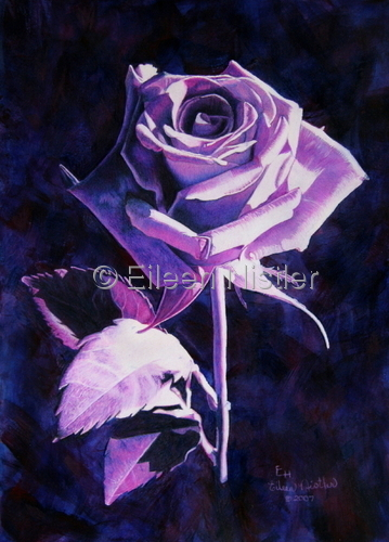 Drawing-Botanical-Preponderance of Purple - Rose From Jan