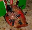 Dimensional Tortured Heart