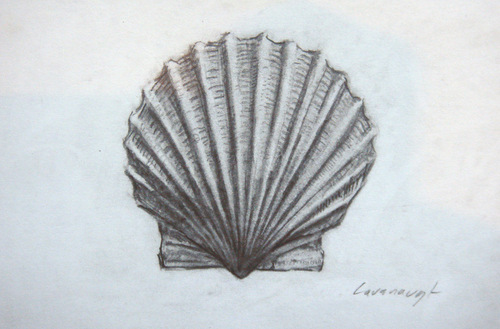 Scallop Shell Drawing