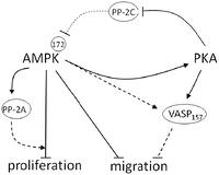 Fphys 2012 additionally Technical Drawing Diagram furthermore Parts For Amana Pki121 as well Water Infrastructure Diagram together with Diagram How Works Dns Server. on diagram of pki