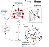 neurosteroids stress and depression