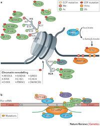 Histone acetyltransferase
