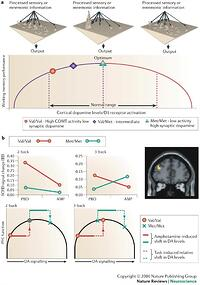 an analysis of the downfalls of using drugs to increase the level of dopamine Low dopamine striatal d2 receptors are associated with prefrontal metabolism in obese subjects: possible contributing factors absence of psychoactive drug use.