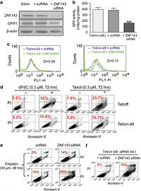 optimizing us mb mediates gene transfer to treg Editor: wasif n khan, university of miami, united states of america  in the  case of foxp3 gene transfer, expression of the transcription  and  demonstrated that tyrtcr cells maintained optimal potency when  tregs were  capable of suppressing t cell-mediated tissue damage in vivo  (170 mb tif) .