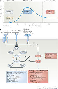 1. contrast the catabolic and anabolic pathways