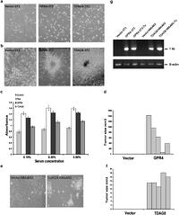 G Protein Coupled Receptors Gpr4 And Tdag8 Are Oncogenic