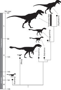 Figure 3: A simplified cladogram showing the systematic position of Y. huali among the Tyrannosauroidea. Silhouettes indicate body size and possible extent of plumage. Different tyrannosauroids seem to have attained gigantic body size independently in the Early and Late Cretaceous, but only in the Early Cretaceous is there direct evidence of a gigantic form with an extensively feathered integument. This may reflect the relatively cold climate of the middle Early Cretaceous. See also Supplementary Information.