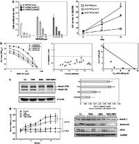 an analysis of the use of two drugs for the prevention and treatment of brest cancer tamoxifen and h Tam is also used for prevention of breast cancer in women at high risk of this disease [4] although aromatase inhibitors are currently available for breast cancer treatment in postmenopausal women [5], tam is still the drug most frequently used for breast cancer treatment [4] nonetheless, prolonged use of.