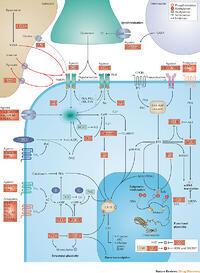 calcium and inositol 1 4 5 trisphosphate receptors a complex relationship