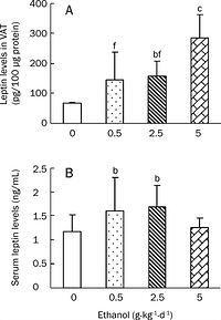 Figure 1: Effects of chronic ethanol treatments on leptin levels in VAT (A) and sera (B) of rats. Wistar rats were fed with edible ethanol at doses of 0, 0.5, 2.5, and 5.0 g·kg-1·d-1for 22 weeks. VAT was obtained from epididymal and perirenal fat pads and blood samples were collected. Leptin levels in both VAT and sera were measured by ELISA. Values are given as mean±SD (n=12 in the 0 and 0.5 g·kg-1·d-1groups; n=11 in the 2.5 g·kg-1·d-1group; n = 10 in the 5.0 g·kg-1·d-1group).bP<0.05, cP<0.01 vs 0 g·kg-1·d-1 group; fP<0.01 vs 5 g·kg-1·d-1 group.
