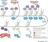 The Role Of Mutations In Epigenetic Regulators In Myeloid