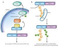 Many ribosomal protein genes are cancer genes in zebrafish