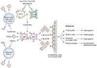 ... advanced glycosylation end-products; T1D, type 1 diabetes; T2D, type 2