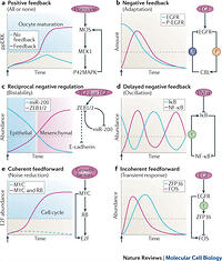 Feedback regulation of EGFR signalling: decision making by ...