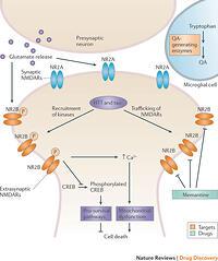 alzheimers disease and calcium signalling Dysregulation of neural calcium signaling in alzheimer disease, bipolar disorder and schizophrenia.