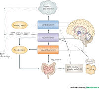 a review of amygdala activity and its correlation with long term emotional information Childhood poverty predicts adult amygdala and frontal activity and connectivity in response to emotional faces we utilized a unique long-term.