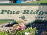 Pine ridge3
