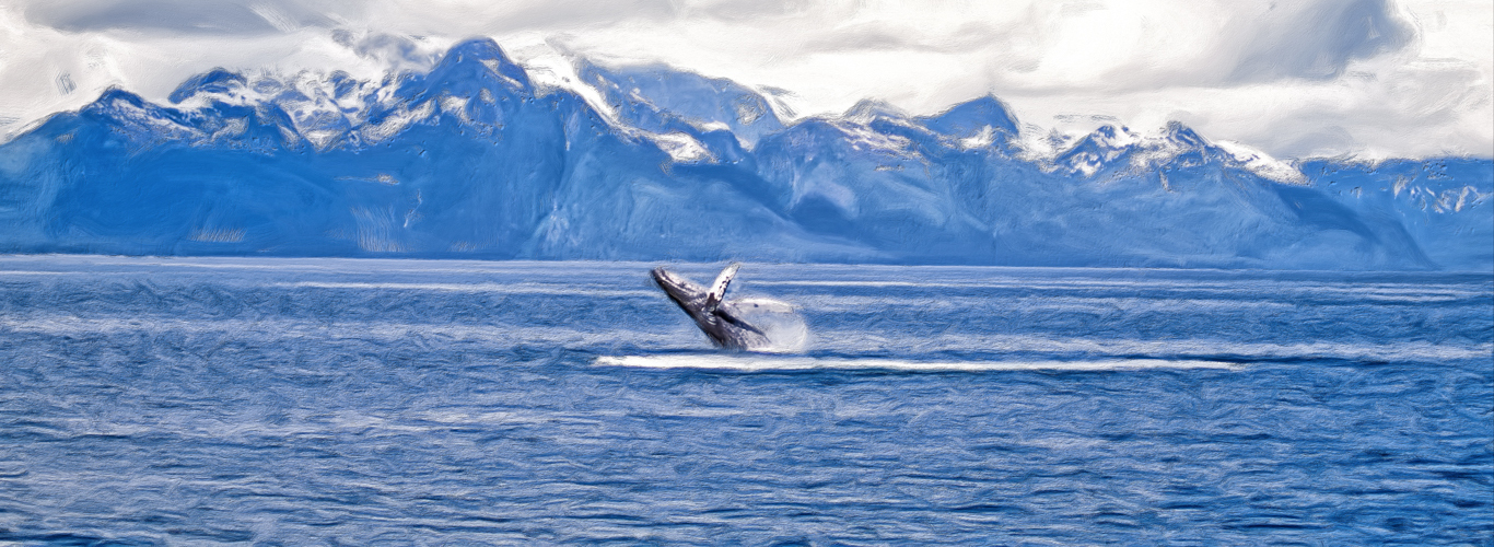 breaching h=whale in alaska