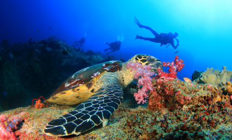 Best Scuba Diving Vacations on Luxury Yachts