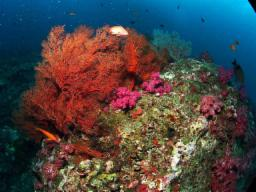 Photo of the dive center