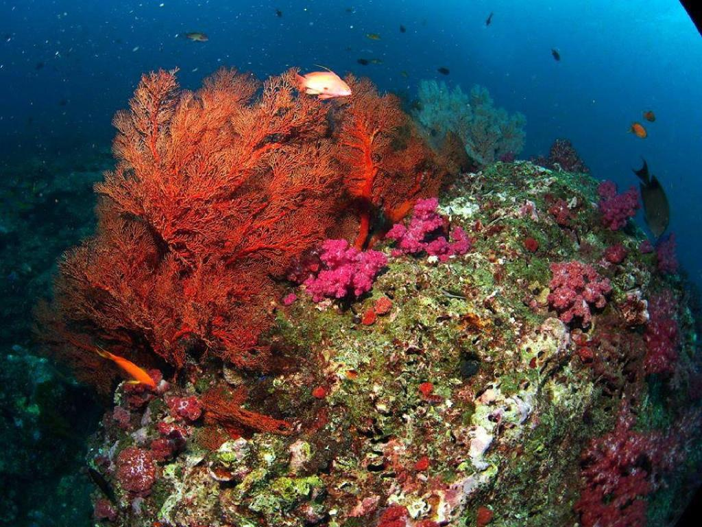 Cover photo of the dive