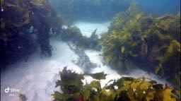 Photo from the dive