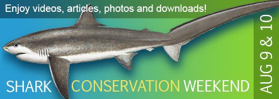 Oregon Coast Aquarium Bites into Shark Week Myths with Facts