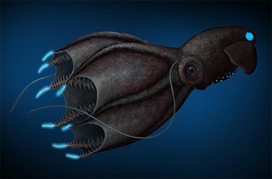 Vampire Squid | Oceanscape Network