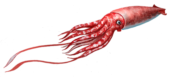 giant squid oceanscape network