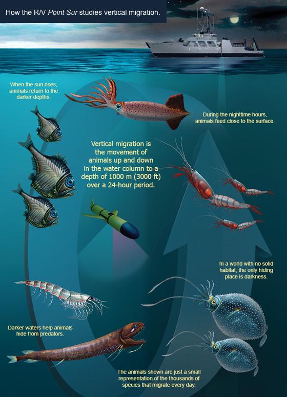 Echolocation and Acoustics | Oceanscape Network