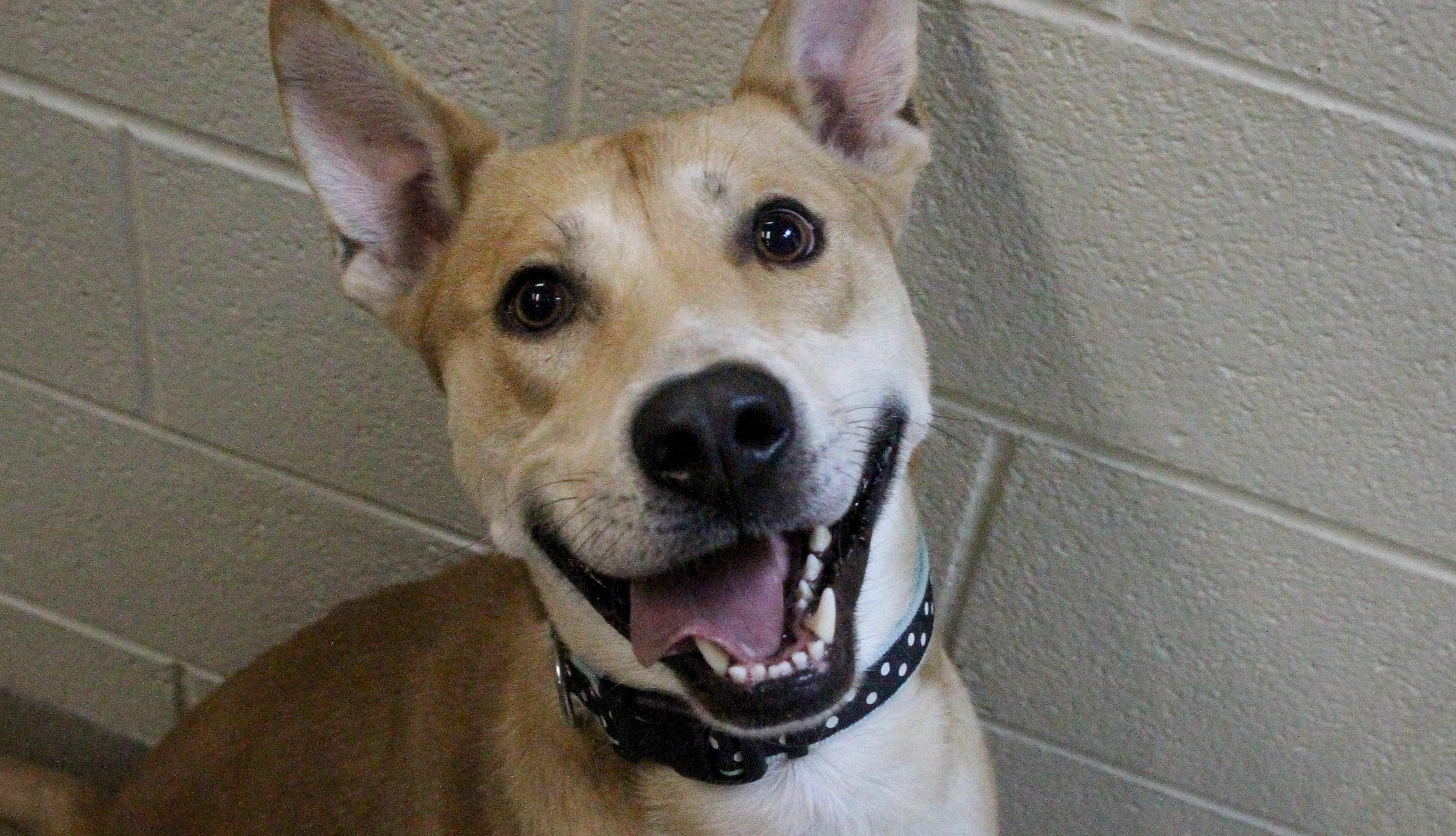 Dewey, Dog