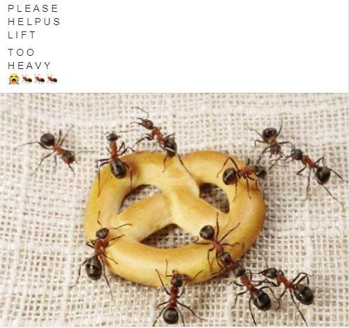 ants on pretzel