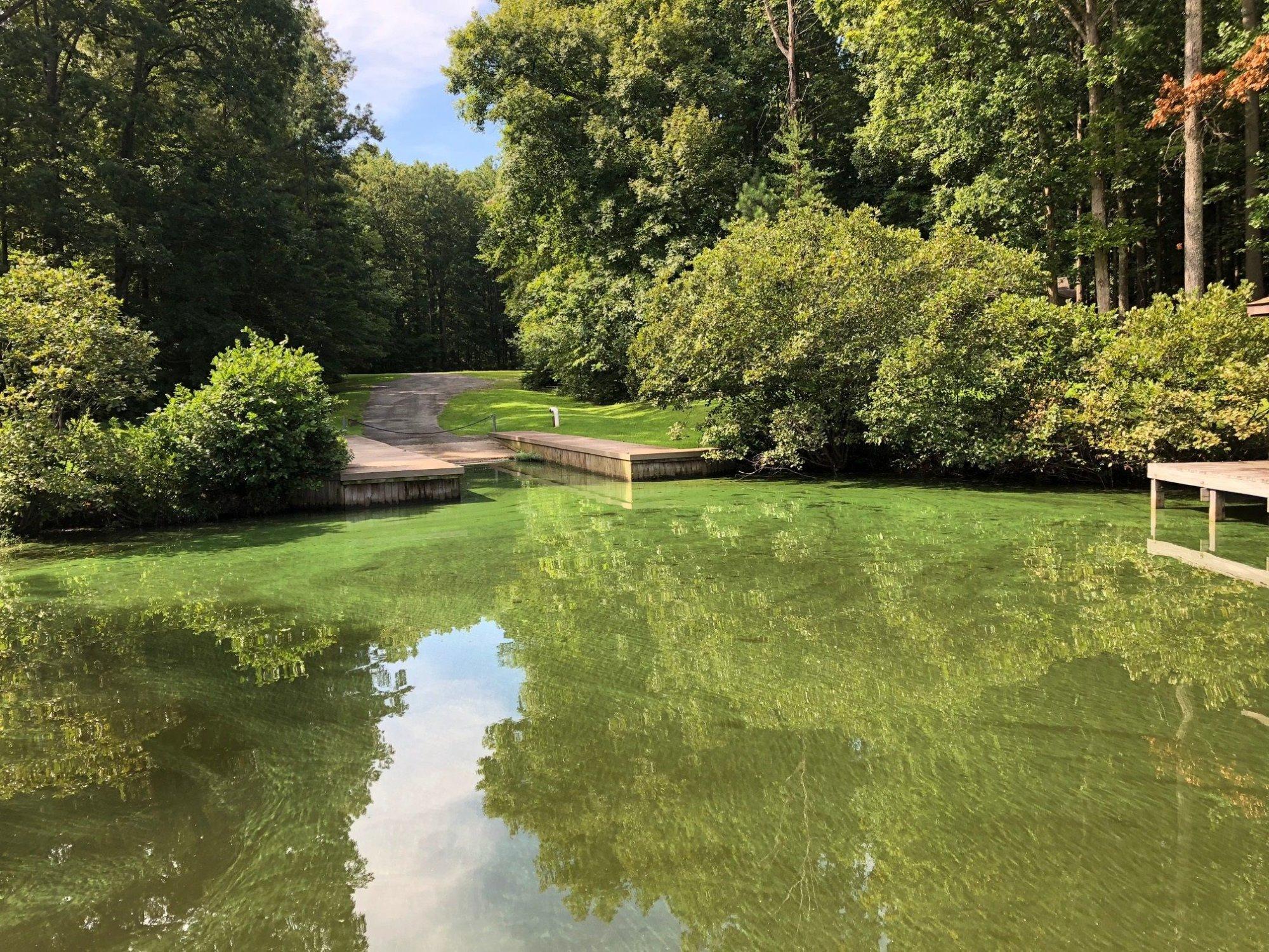 Lake Anna algae