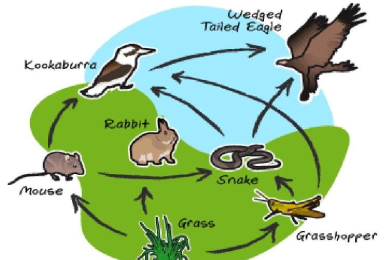 rabbit ecosystem