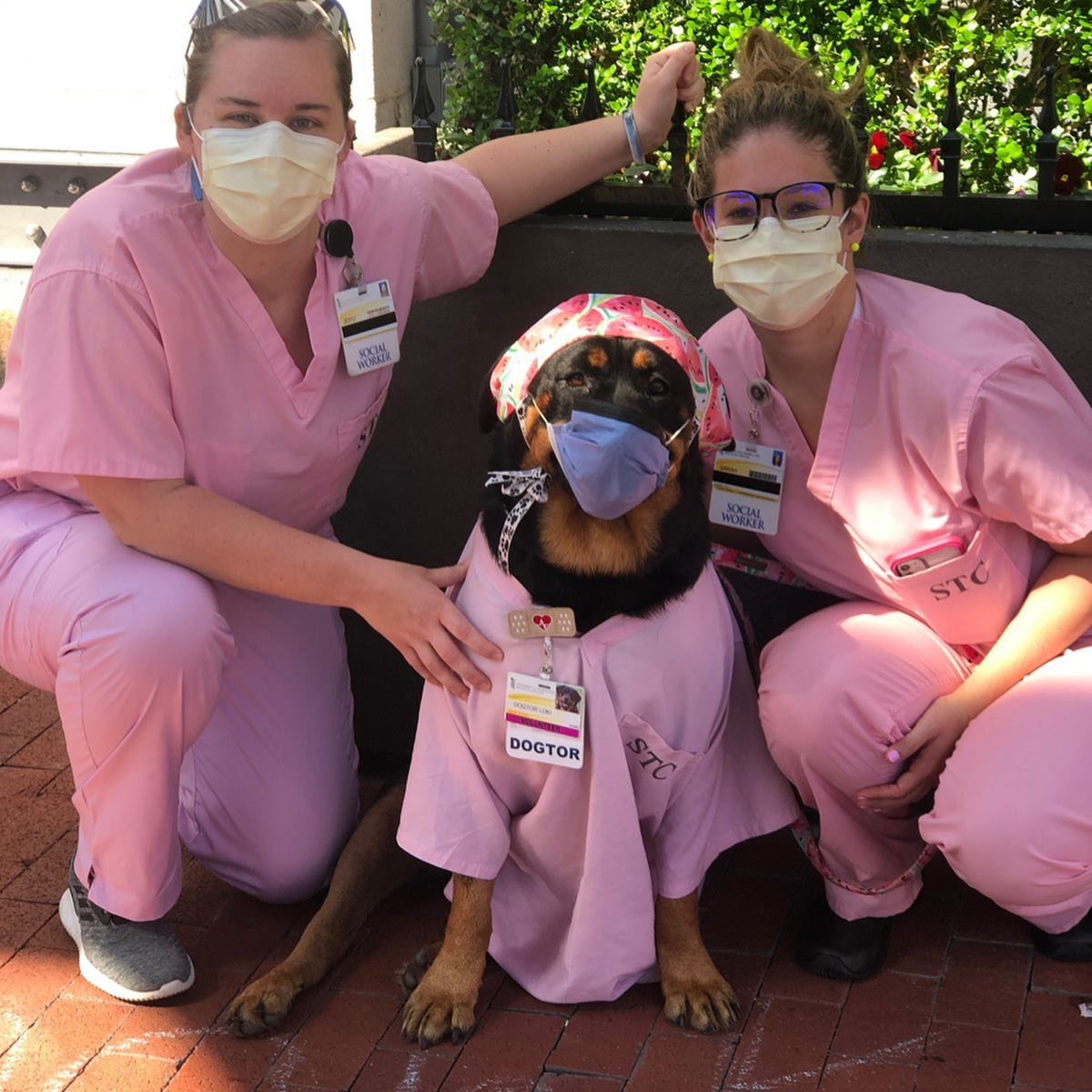 dog with nurses
