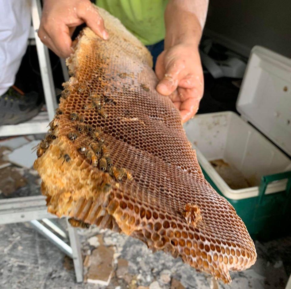 honeycomb, beehive