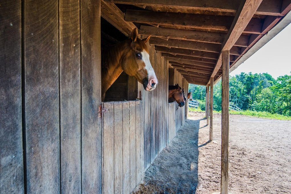 stable, horse