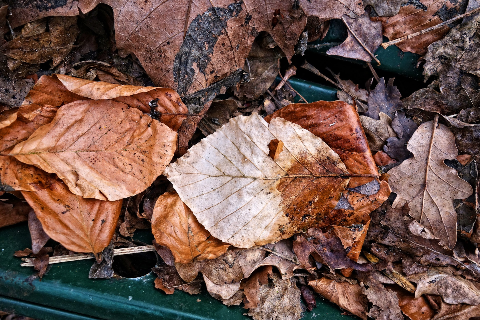 dead brown leaves