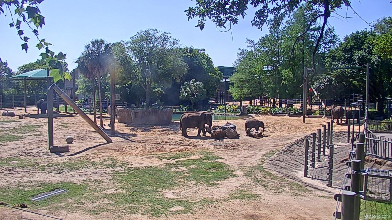elephants at houston zoo
