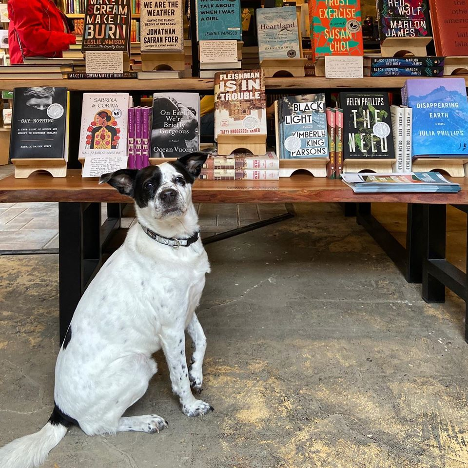 dog standing by books
