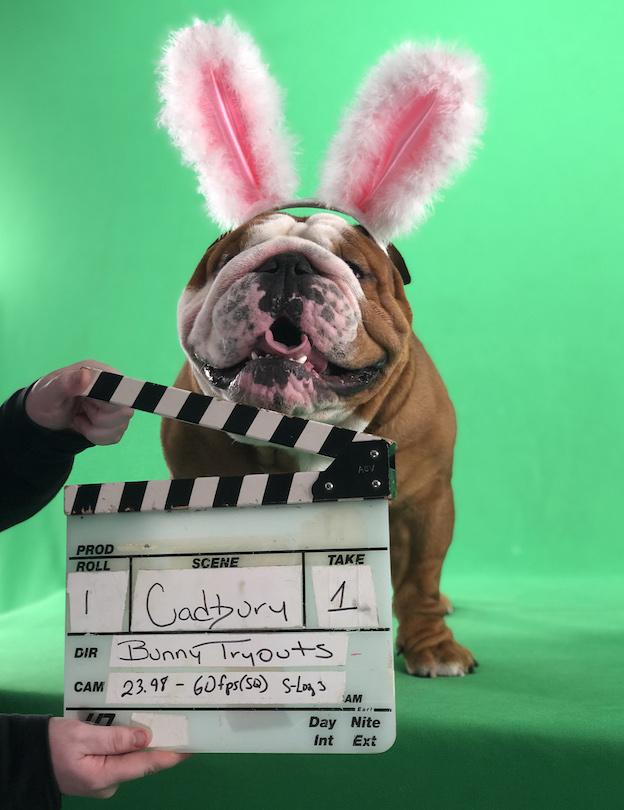 Henri, 2019's Cadbury Clucking Bunny
