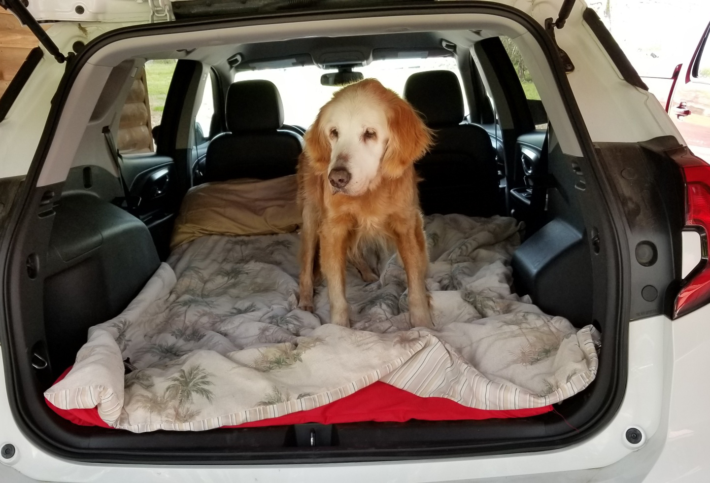 20 year old golden retriever travels