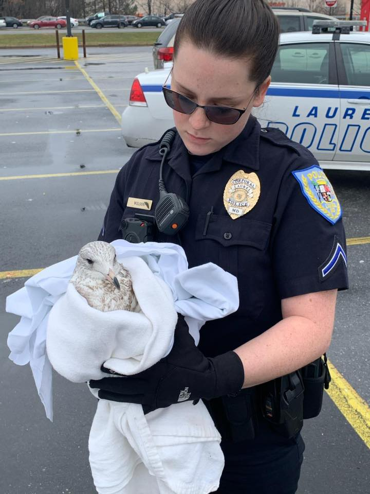seagull, police officer